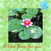 lotus flower for you